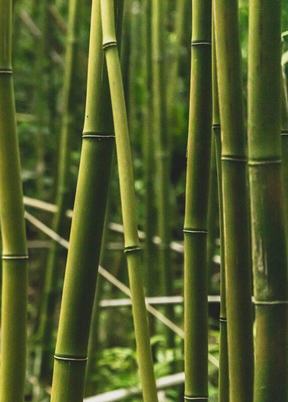 Bamboo fibers fabrics Sensify