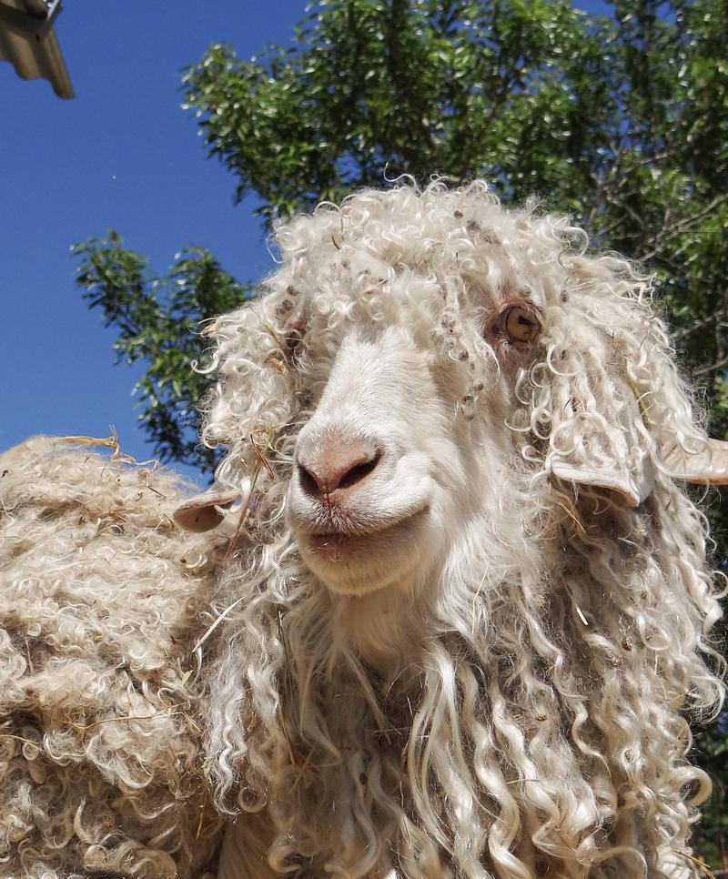 Mohair wool, sustainable, Sensify